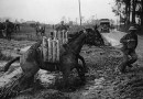 Million-dollar target to honor war horses as US marks 100th anniversary