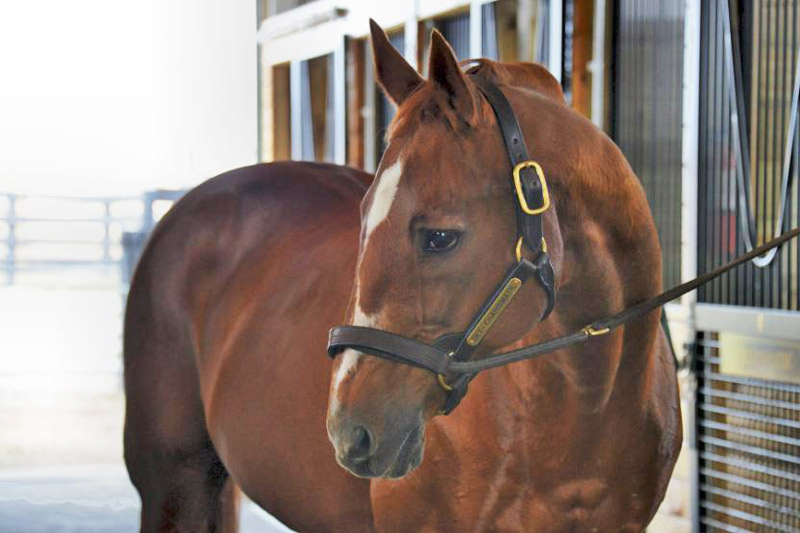 Charismatic (March 13, 1996 - February 19, 2017)