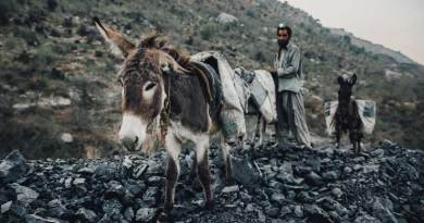 Donkeys at work in Pakistan. Pockets of Europe still rely heavily on working equines, too, with a new report set to help improve their lives. Photo: The Brooke