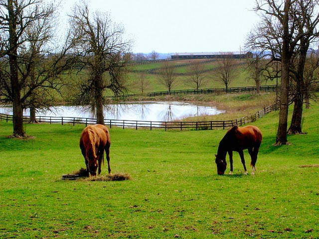 Horses graze on a farm in bluegrass country, south of Paris, Kentucky.