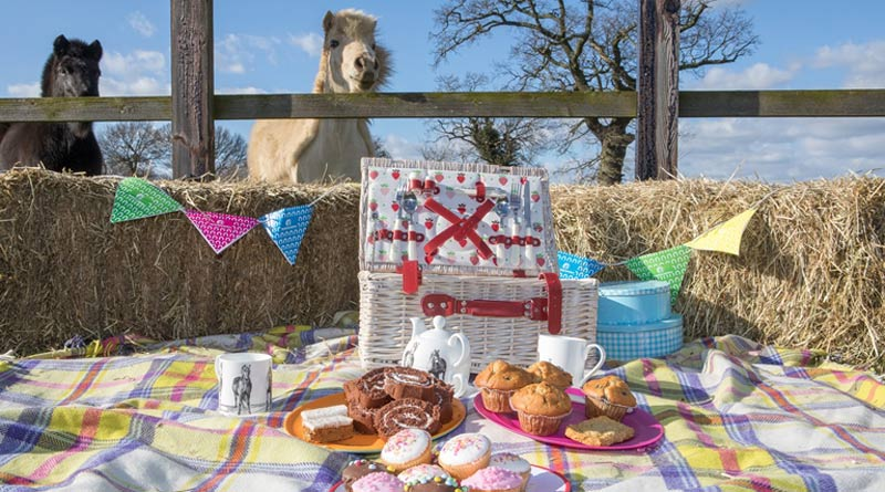 "Pony treats galore! Horse lovers are being urged to take part in ""The Morning Feed"", with World Horse Welfare."