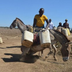 """Crisis point"" for Kenyan donkeys as population wipeout predicted by 2023"