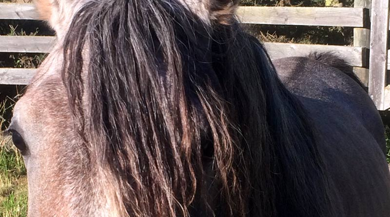 A question of degrees: Have the textbooks been astray on equine body temperature?