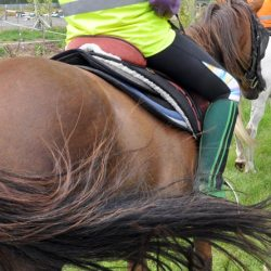 Study identifies worrying lack of knowledge among some horse owners