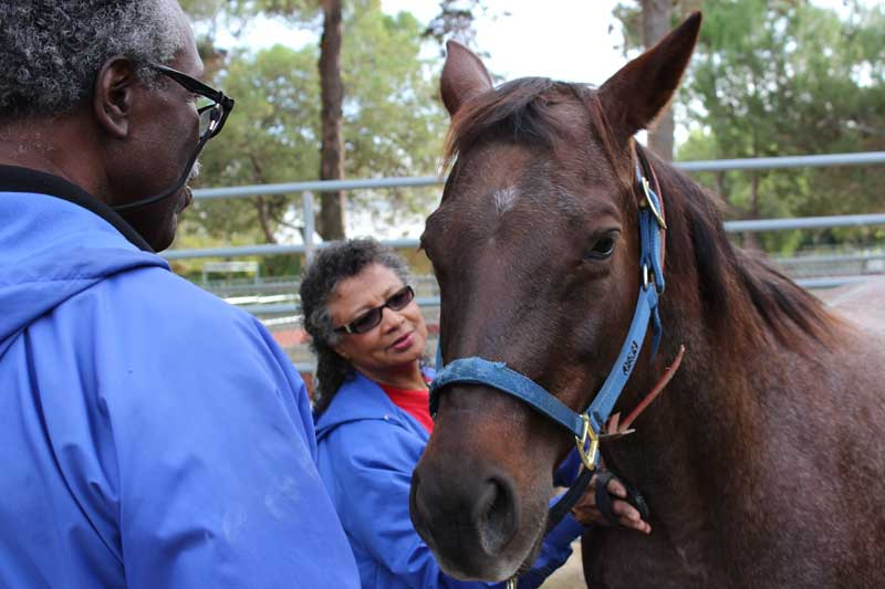 The therapy program provides ideal work for older horses. Photo: Elaine Chan