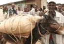 Researchers paint sobering picture of equine welfare challenges in poor regions