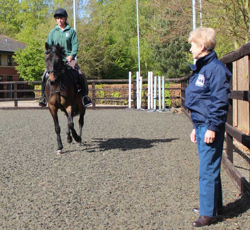 Dr Sue Dyson assesses a horse at an Animal Health Trust Clinic. Photo: Animal Health Trust