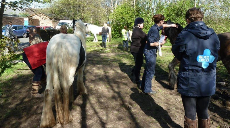 Members of the Blue Cross education and horse welfare teams in action at a recent castration and healthcare clinic.