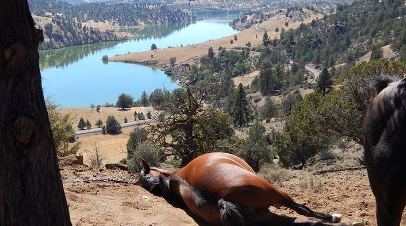 Lakota enjoys a nap on Wildhorse Ranch, lying in the clay dust.