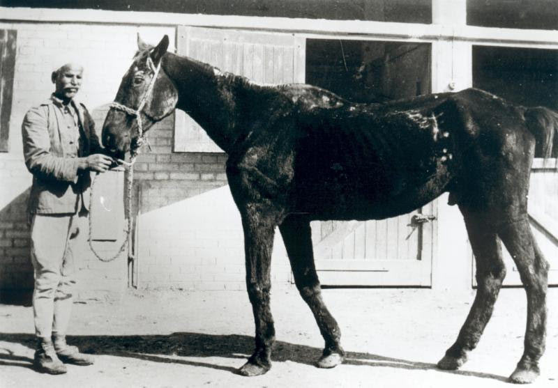 """Old Bill"", one of the first former war horses Dorothy Brooke rescued. His image appears in the Horse Heroes campaign."