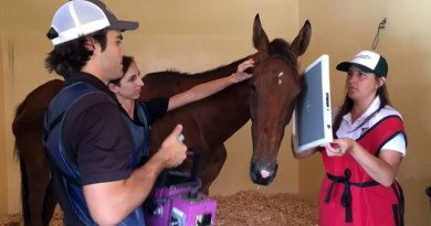 Tuesday undergoes an X-ray at the Palm Beach Equine Clinic.