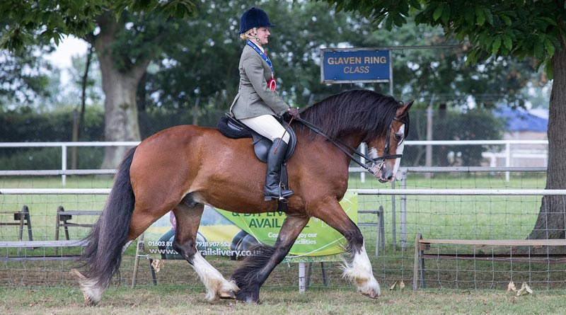 Nikki Cox and Bert won the World Horse Welfare Rescue Classes championship title at the Royal Norfolk Show on Thursday.