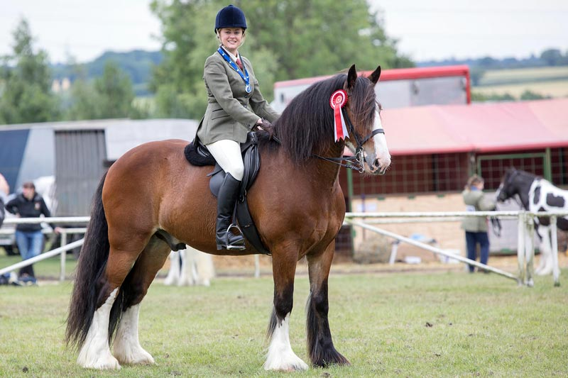 Bert, who was rehomed from Redwings, won the 4yo and over ridden class, and the overall championship in the World Horse Welfare Rescue section at the Royal Norfolk Show on Thursday.