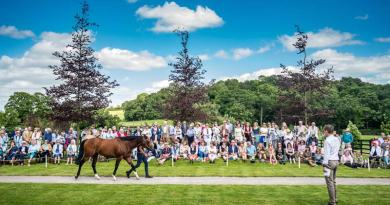 The stallion Havana Gold was among those paraded at Tweenhills Farm and Stud in an event for working equine charity Brooke.