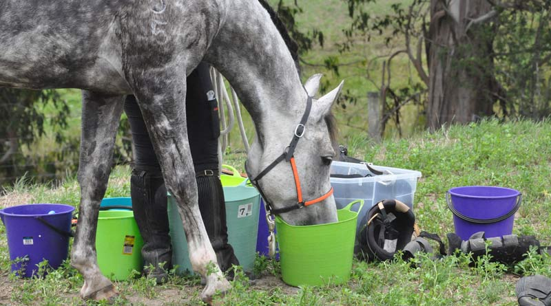 The horse must replace lost fluid, but it needs to be done a little at a time and often.
