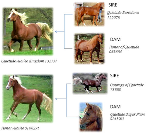 Flaxen inheritance patterns in chestnut morgan horses.