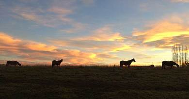 Sweden's horse owners could manage parasite burdens better, study finds