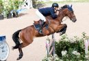 Nature of warm-up affects showjumping performance, researchers find