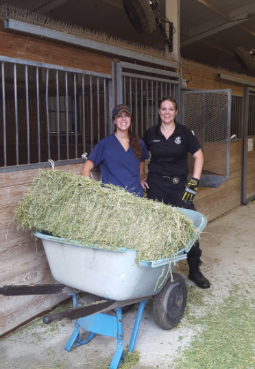 Animal charities have helped bring feed and shelter to horses in need.