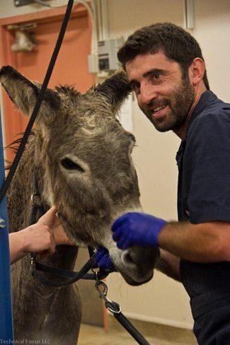 Donkey dentist Dr. João Rodriguez.