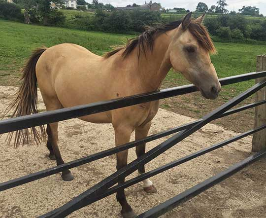 Star is unrecognisable from the horse taken into care by World Horse Welfare.