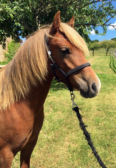 World Horse Welfare Griff