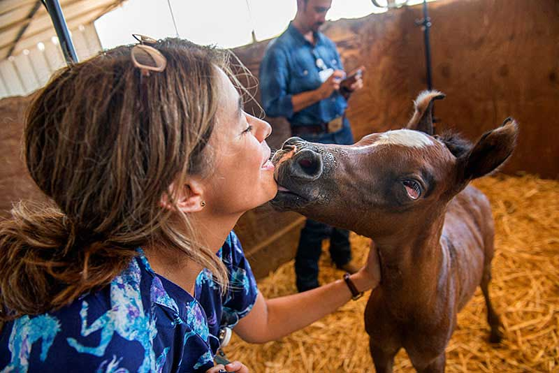 UC Davis veterinary neurologist Monica Aleman enjoys affection from a newborn foal that has survived the syndrome.