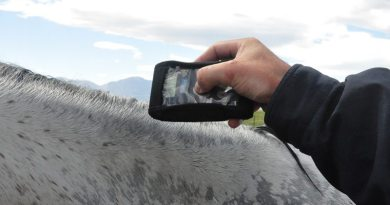 Feeling the heat: Microchips show promise in monitoring the temperature of horses