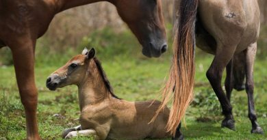 HSUS has reported that some horses in Vieques lost their lives, killed by storm surges or injury from debris, and a fair number of animals require medicalattention.