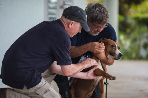 Dr Dickie Vest, an equine veterinarian from the Cleveland Amory Black Beauty Ranch, and HSUS wildlife handling and response expert Dave Pauli conduct a wellness check on a dog in Vieques.