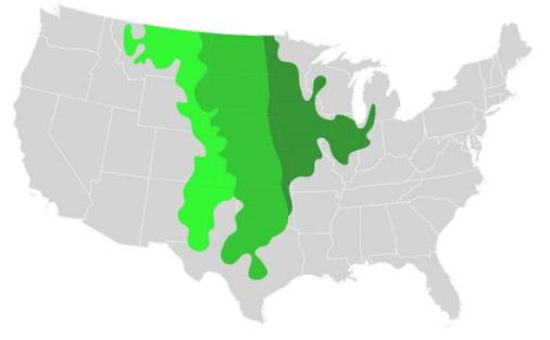 The tallgrass priarie is shown in dark green. The mid-green shows the general location of the mid-grass prairie and the light green shows the short-grass prairie on the high plains.Image: Blank_US_Map.svg  CC-BY-SA-3.0 via Wikimedia Commons