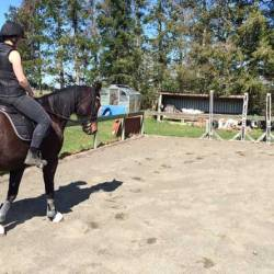 Trainability of horses linked to good levels of oxytocin
