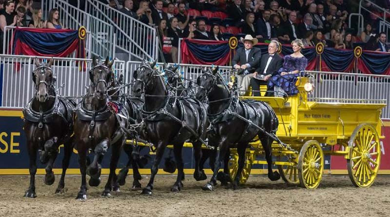 Blue Ribbon Days Percheron won the $25,000 Royal Six-Horse Draft Championship on closing night of the 2017 Royal Horse Show in Toronto, Ontario.