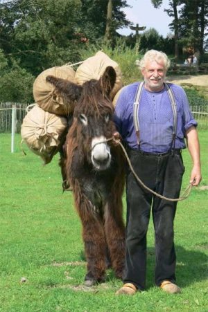 Donkeys are still being used to work in some areas in Europe where it is not feasible to work with machines.