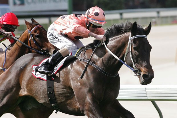 Black Caviar with Luke Nolen up winning the William Crockett Stakes.