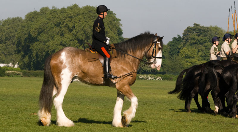 Digger during his time with the Household Cavalry.