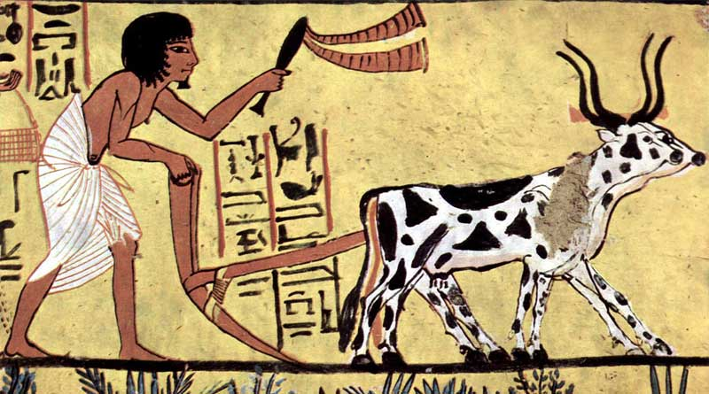 A painter of the burial chamber of Sennedjem, in Ancient Egypt. The utilisation of oxen and horses to pull ploughs made some farmers very rich, according to researchers. Photo: Public domain, via Wikimedia Commons