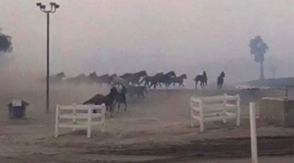 Horses run to safety as smoke engulfs them during the Lilac Fire in California.
