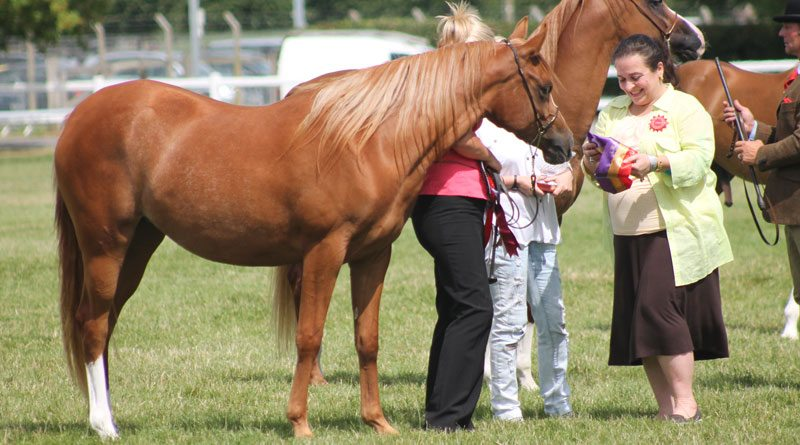 Princess Alia is a vocal opponent of abusive training and showing in the arabian horse world.