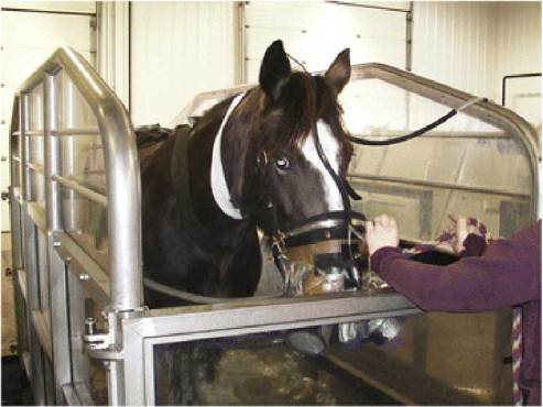An ergospirometry system using a facemask was employed on the horses exercising on the water treadmill. Photo: Greco-Otto et al. https://doi.org/10.1186/s12917-017-1290-2