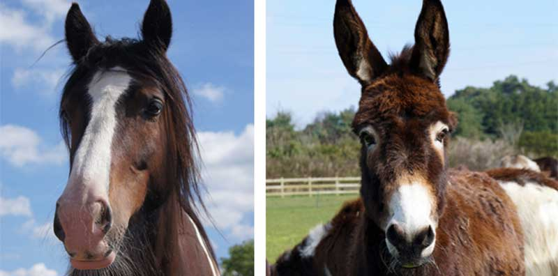 Rumpel, left, and Esther are two of Redwings' Amersham survivors.