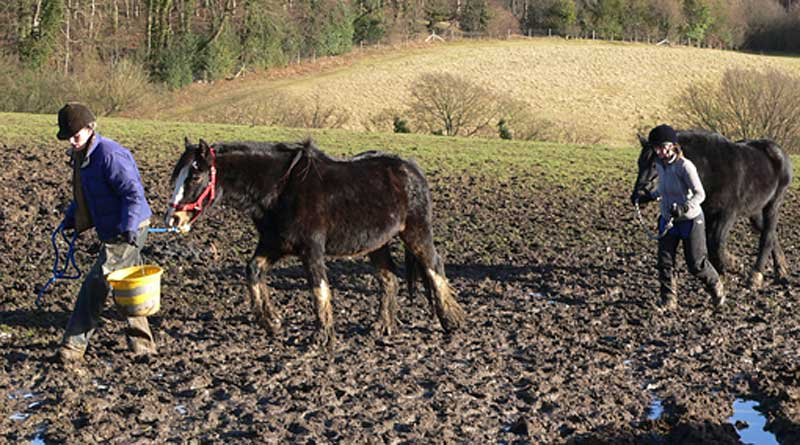 Horse and donkeys were found in appalling conditions at Spindle Farm