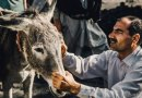 Equine welfare tool goes global to tackle working horse issues