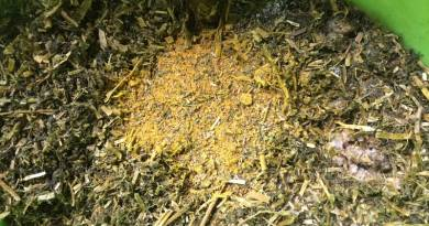 The equine gastric ulcer epidemic: How herbal healing can help