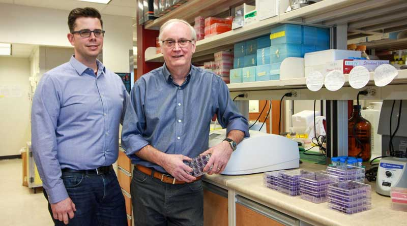 David Evans and Ryan Noyce have created a new synthetic virus they hope could lead to the development of a more effective vaccine against smallpox. Photo: Melissa Fabrizio