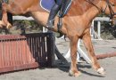 Good training surfaces essential to a competition horse's development