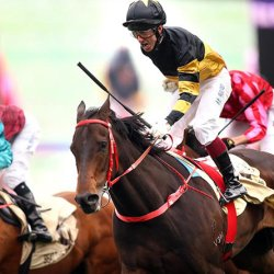Researchers can predict whether a horse is likely to return to racing, a new study reveals. © HKJC