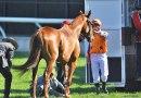 NZ to get five new custom-built horse ambulances