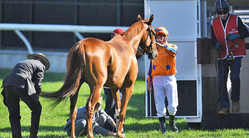 Racehorse Gingernuts being loaded onto a horse ambulance after his injury before theEmirates Stakes at Flemington last November. Five new custom horse ambulances will be launched in New Zealand at the end of this year.
