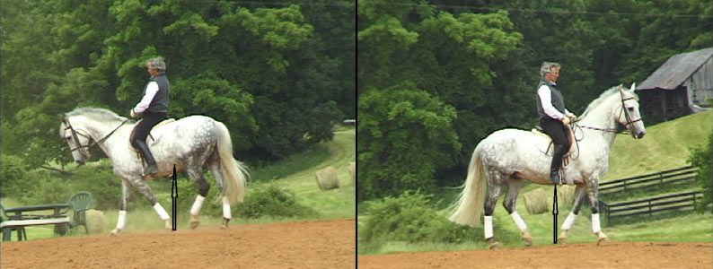 A horse showing backward shift of the forelegs, left, and at right, the same horse placing his forelegs more forward a few minutes later.